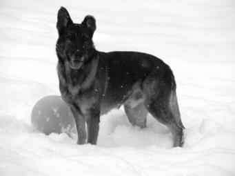 Yukon-vom-Bärenfang-----VQNwgyzbgtOriw57L9XlRt6hOsSW5a6QVadfo_tITJo,