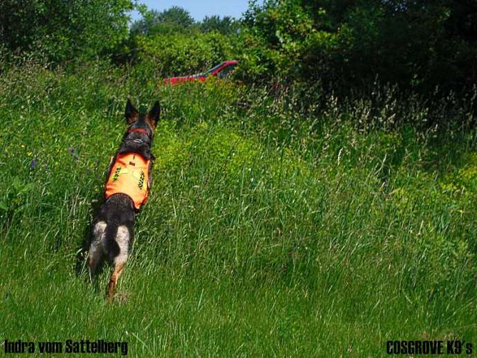 Wilderness Area Search Training with Indra
