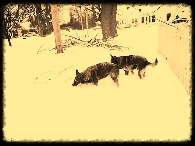 Nala and Yukon