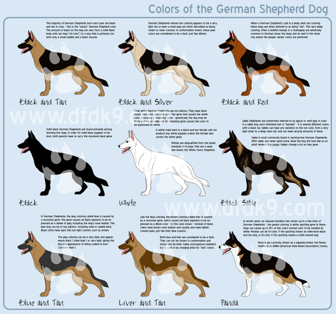 shepherd-colors-small